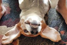 Funny Pet Photo Contest / So you have a photo that makes you laugh out loud?? Post your funny photos on our wall and tell us what makes your pet so funny.