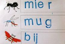 insecten onderwijs