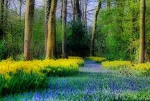 seasons/spring