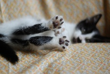 KITTY TOES!  / by Tamar Arslanian