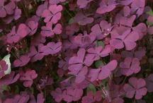 Kukkapenkki