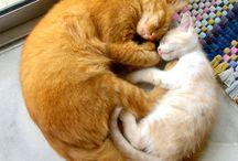 ginger cats i like