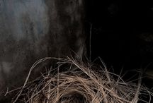 BIRDS, NESTS & EGGS / by Rena Casey-Wilhelm