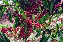 Visit Don Juan Coffee Tour
