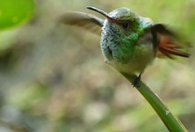 birds / fly!
