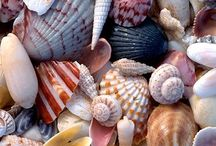 Nature | Sea shell