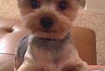 Corte de pelo para perro