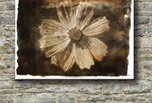 Unique Flowers canvas prints / Beautiful photo's of flowers transformed into canvas prints.