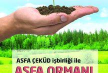 Asfa Ormanı Oluşturuyoruz / Asfa Ormanı Oluşturuyoruz