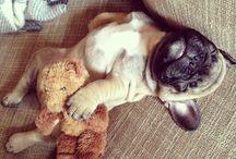 Cuddles.