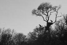 Wildlife & Beauty / Imágenes de mis rodajes y trabajos