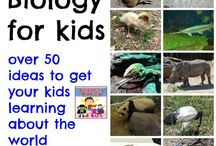 Science - Apologia Zoology 3 / Learning about land creatures of the sixth day