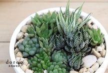 minik bitkiler