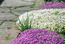 Blumen für'n Garten