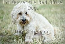 Buster's Blogs / Check out Buster's friendly homeopathic advice for animals and their owners.