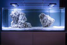 Red Sea útes