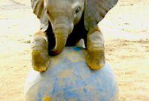 Elephant love / All things elephants / by Dauchka22