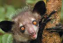 Madagascar's Strangest