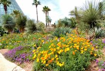 Desert in Bloom / The Cactus and Succulent Garden is filled with colorful and sculptural plantings / by San Antonio Botanical Garden