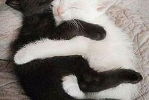 Cats ><