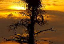 SUNRISE...SUNSET..... / by Marilyn Maltezo