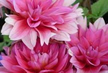 Blumen / Impressionen von der LaGa in Oranienburg