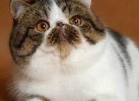 Cats / Persiani e...