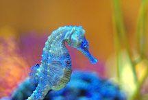 Sea Horses Marine life