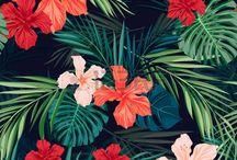flores hawainas