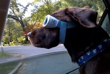we love doggles / by the essentials inside