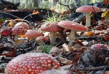 cool toadstools