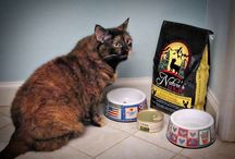 *Quality Pet Food* / by Kelley Nelson