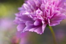Blumenfotos