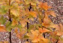 Beaux arbustes à feuilles caduques