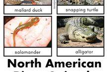 Homeschool: River & Pond Animals