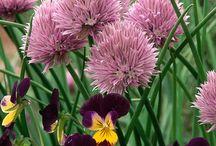 YlleKKellY Indoor Gardening / by Kelly Rita Birtch