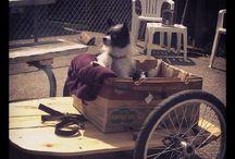 Tony Joe Trailer Dog / by Thomas Cole