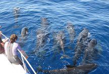 Dauphins Bleus et Blancs / Nager avec les dauphins en liberté #nagedauphins