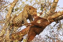 Safari photographs / As taken by our clients from around the  world