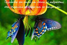 Metamorphosis / Inspirational Quotes