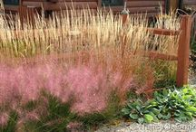 Calamagrostis Combinations / Plant partnerships that include feather reed grasses