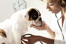 Pets and care of them / Our pets