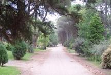 calles de Carilo,  pina  y Gesell