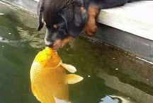Furry friends...how not to love them!