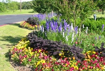 landscaping and gardening / by Angie Graham