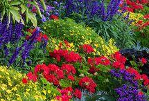 Flower Combinations / by Amanda Kupiec
