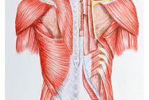 Medical Illustraciencia