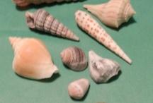 shells / by Glenna J Moore