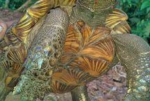 Batu Katak / Batu Katak village North sumatra