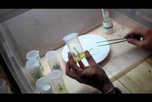 tissue culture